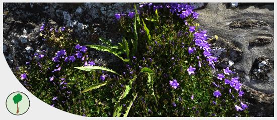Illustration_biodiversité-flore-Bretagne-env