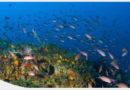 Décret n°2020-879 du 15 juillet 2020 relatif aux attributions du ministre de la mer
